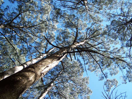 mountain ash: Mountain Ash Stock Photo
