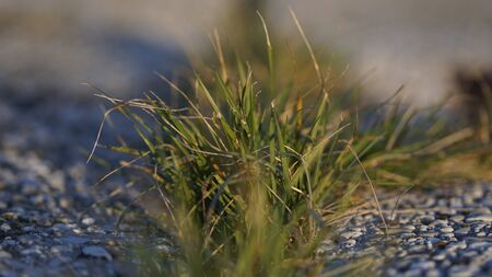 Close-up view of new grass growing through pavement in spring
