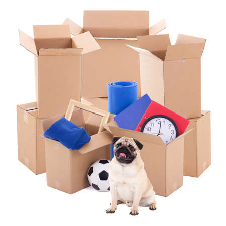 moving day concept - brown cardboard boxes and pug dog isolated on white background