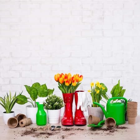 composition of gardening tools, potted plants and spring flowers on wooden table over white brick wall background Stock Photo