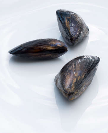 Three single sea mussels on a white ceramic plate.