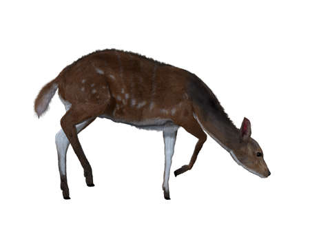 3d illustration of a deer.