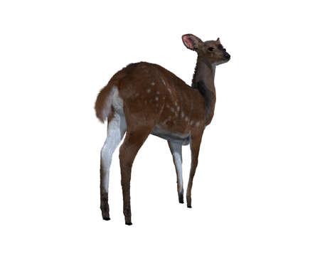 3d illustration of a deer.