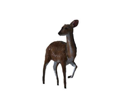 mule deer: 3d illustration of a deer.