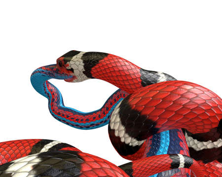 3D Illustration of a Scarlet King Snake Swallowing a Blue Red Snake Reklamní fotografie - 98083739