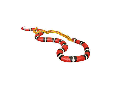 3D Illustration of a Scarlet King Snake Swallowing a Yellow Snake Stok Fotoğraf
