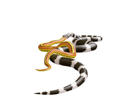 3D Illustration of a California King Snake Swallowing a Yellow Snake Фото со стока