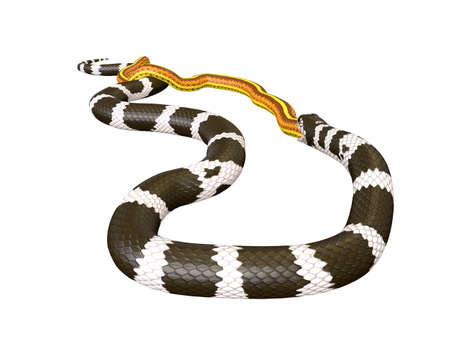 3D Illustration of a California King Snake Swallowing a Yellow Snake Reklamní fotografie - 98166134