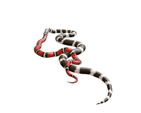 3D Illustration of a California King Snake Swallowing a Scarlet King Snake