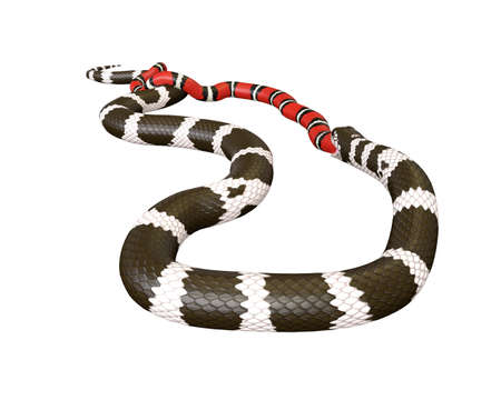 3D Illustration of a California King Snake Swallowing a Scarlet King Snake Banco de Imagens - 98137142