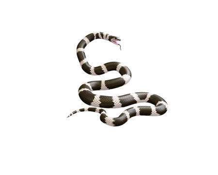 3D Illustration of a California King Snake