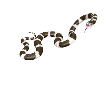 3D Illustration of a California King Snake Swallowing a Garter Snake Фото со стока - 98137145