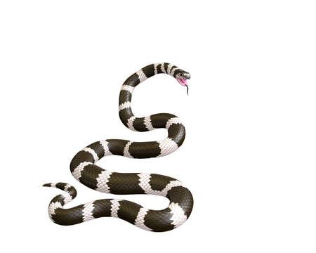 3D Illustration of a California King Snake Swallowing a Garter Snake Фото со стока - 98085710