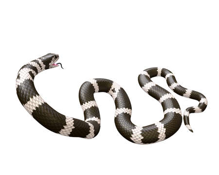 3D Illustration of a California King Snake Swallowing a Garter Snake Фото со стока - 98137147