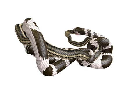 3D Illustration of a California King Snake Swallowing a Garter Snake Фото со стока - 98145813