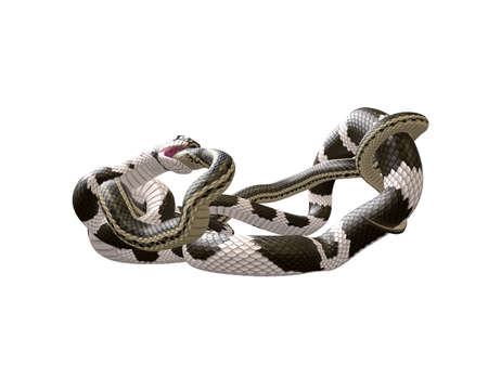 3D Illustration of a California King Snake Swallowing a Garter Snake