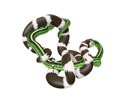 3D Illustration of a California King Snake Swallowing a Green Snake Banco de Imagens - 98188426