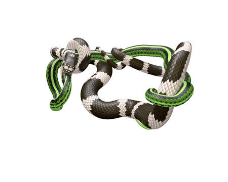 3D Illustration of a California King Snake Swallowing a Green Snake Фото со стока - 98085712