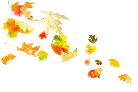 vent: Automne feuilles qui tombent et le filage isol� sur blanc