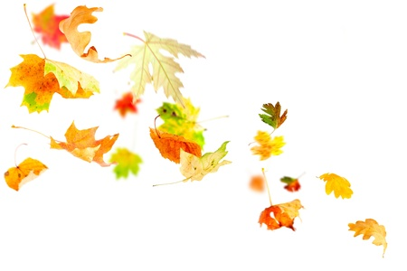 falling leaves: Autumn leaves falling and spinning isolated on white Stock Photo