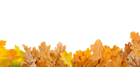 Autumn oak leaves on the bottom isolated on white photo