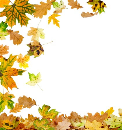 falling leaves: Autumn oak and maple leaves falling to the ground