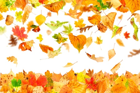 leaf close up: Autumn leaves falling and spinning isolated on white Stock Photo