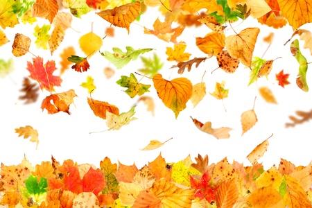 Hojas de otoño cayendo y girando aislado en blanco Foto de archivo