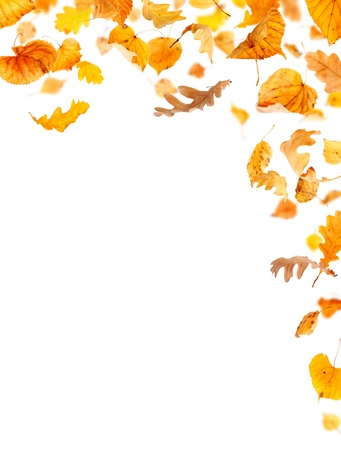 Falling leaves on white background photo