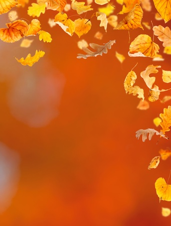 Falling leaves against the autumn background