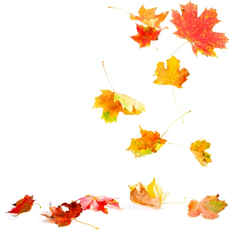 Autumn leaves falling to the ground Stock Photo - 10670765
