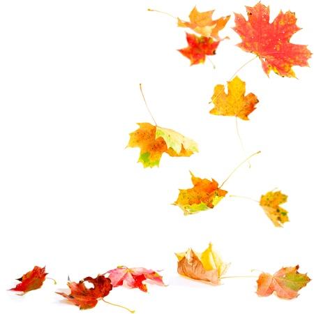 bladeren: Herfstbladeren vallen op de grond