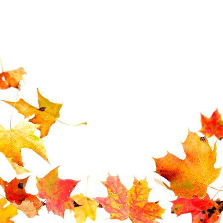 Falling autumn maple leaves isolated on white Stock Photo - 10670820