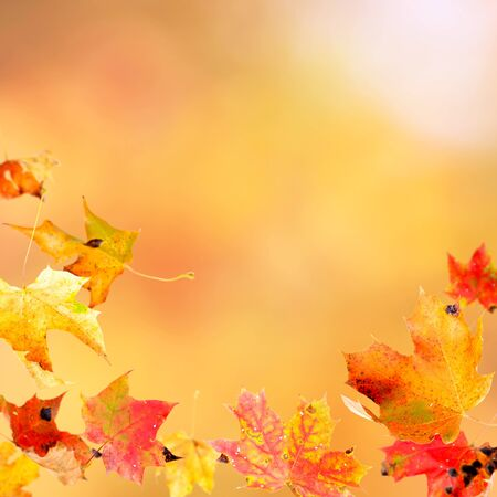 Falling leaves against the autumn background photo