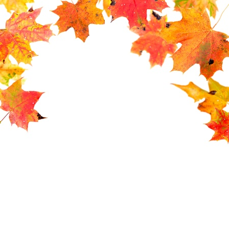 Falling autumn maple leaves isolated on white photo