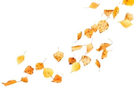 Hojas de otoño cayendo y girando aislado en blanco