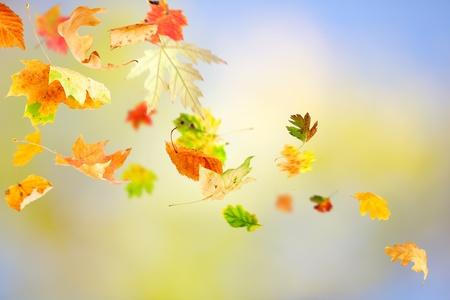 Hojas de otoño cayendo y girando sobre fondo natural Foto de archivo