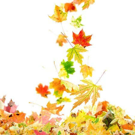 lying on leaves: Colorful autumn leaves falling to the ground