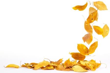 hojas secas: Hojas de oto�o cayendo al suelo