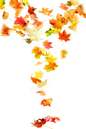 Autumn leaves falling and spinning isolated on white Stock Photo