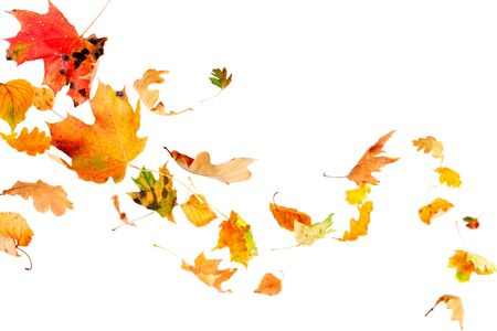 Multi colored leaves falling and spinning isolated on white background