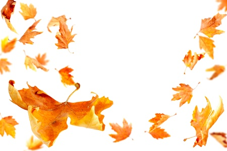 Hojas de otoño cayendo y giro aisladas sobre fondo blanco
