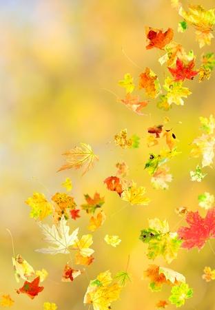 가을 배경에 떨어지는 나뭇잎