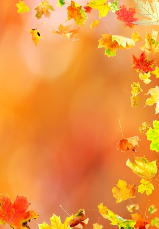 fallen leaves: Falling leaves against the autumn background