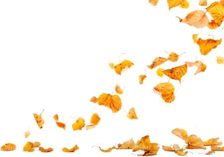 가을 잎은 땅에 떨어지고 스톡 콘텐츠