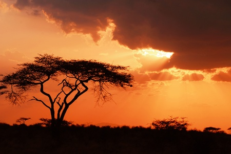africa safari: Beautiful african sunset