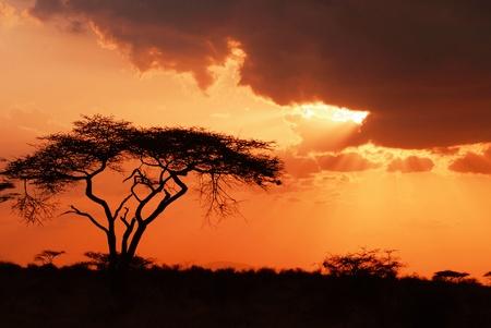 Hermosa puesta de sol africano