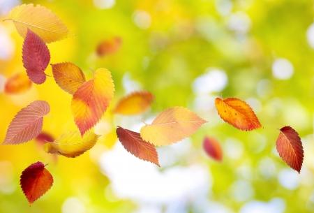 Fondo del otoño con las hojas que caen y girando Foto de archivo