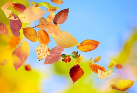 Autumn background with different falling leaves Stock Photo