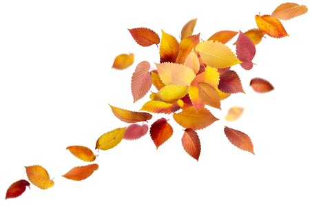 fallen leaves: Heap of colorful falling leaves isolated on white